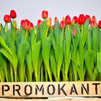 Promokant