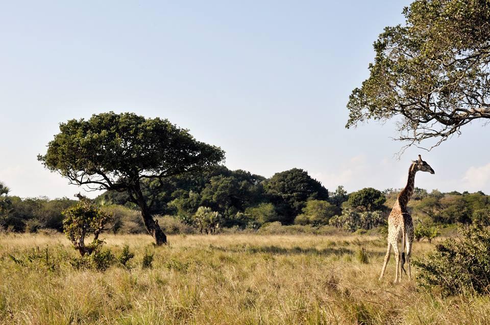Mungo Park SA